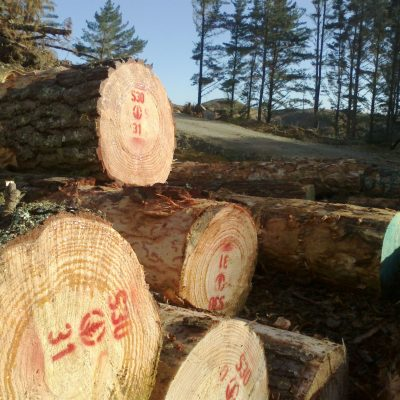 High quality Northland sawlogs