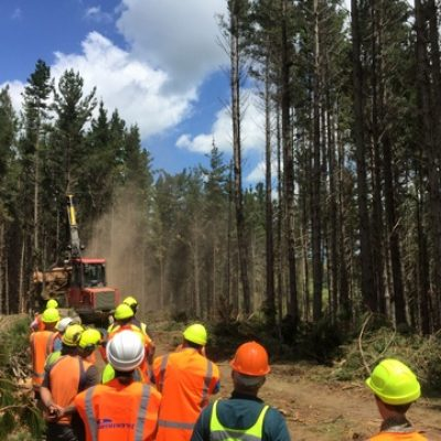 Perry Forest farm forestry day