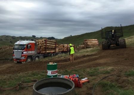 Taranaki woodlot logging