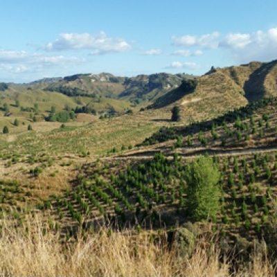 Inland Taranaki new planting