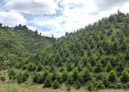 Motukawa Forest