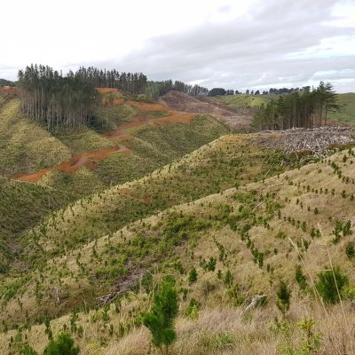 Onewhero/ Port Waikato replanting
