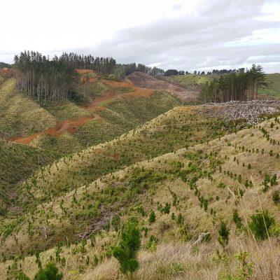 Onewhero/ Port Waikato replanting