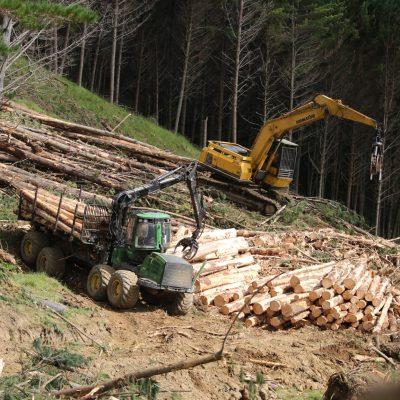 Forest Harvesting & Marketing