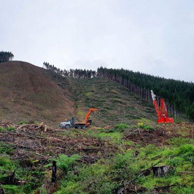 Challenging downhill logging
